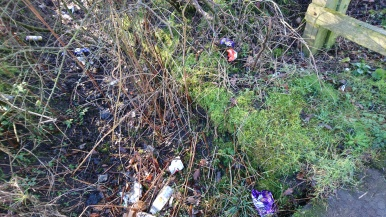 Hedgerow on Clayhanger Lane: image madwblog